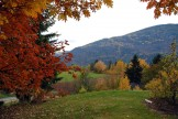Columbia Gardens Winery View In Fall