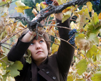 Have Fun Pruning Our Vines With Us in February!