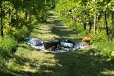 picnic in vineyard